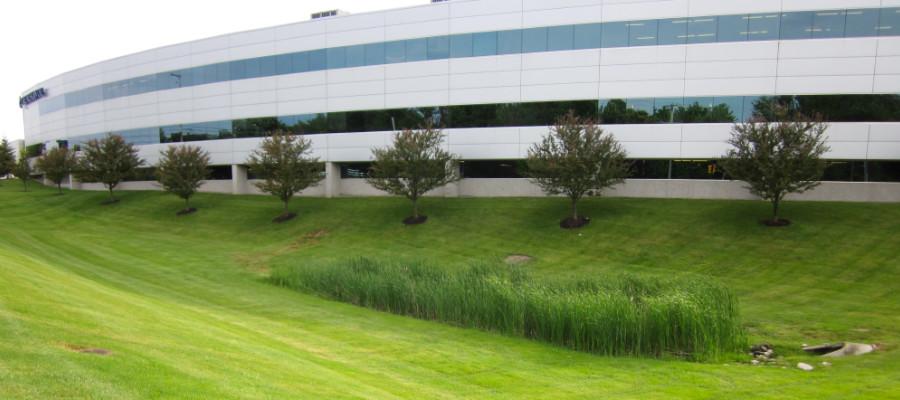 landscape management services